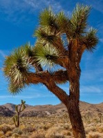 Joshua Tree National Park Audio Guide