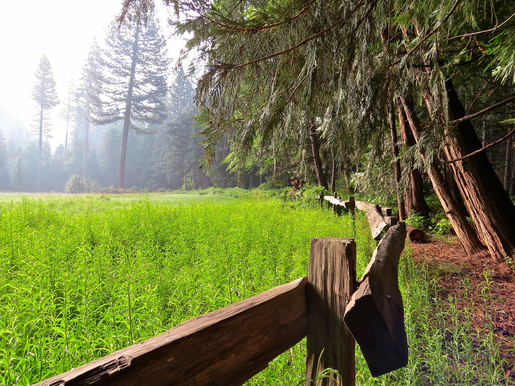 Where to Camp in Sequoia and Kings Canyon: Giant Forest